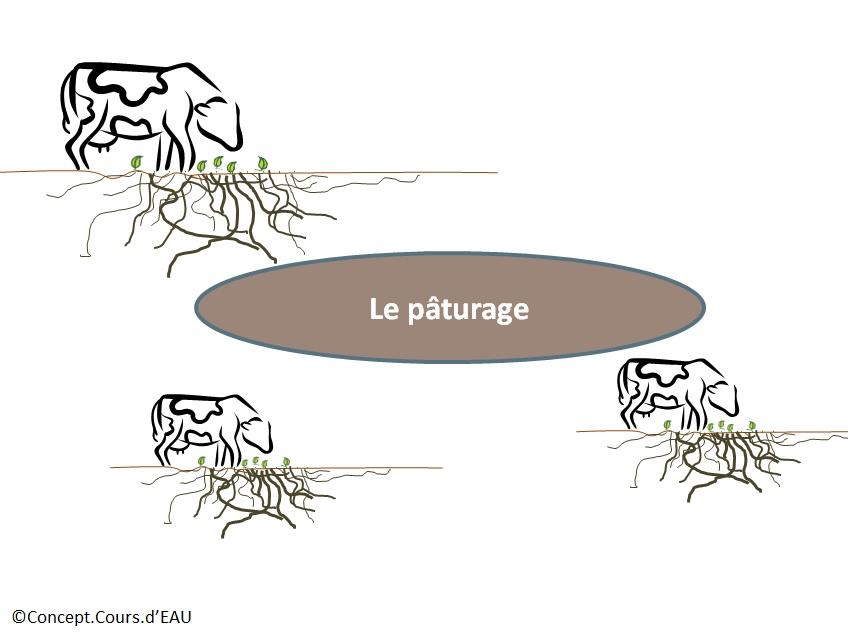 103_paturage