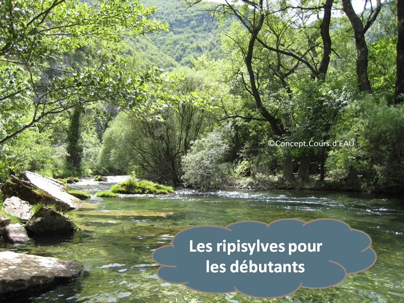 Les ripisylves