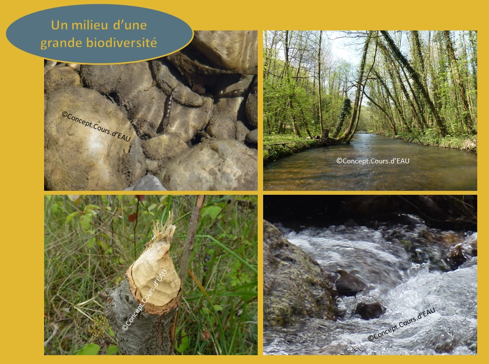 Ripisylve et biodiversité