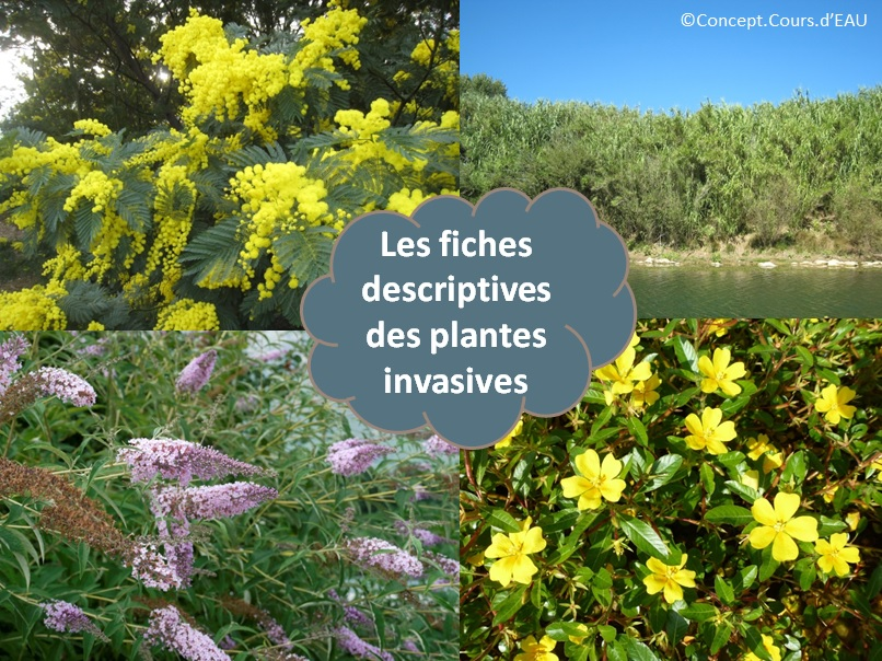 109_fiches_invasives