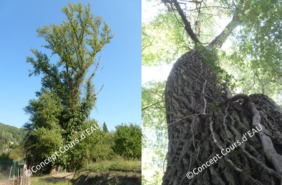 Conserver les arbres remarquables